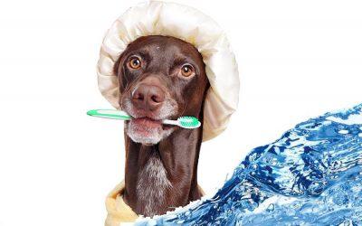 Consejos para bañar tu mascota